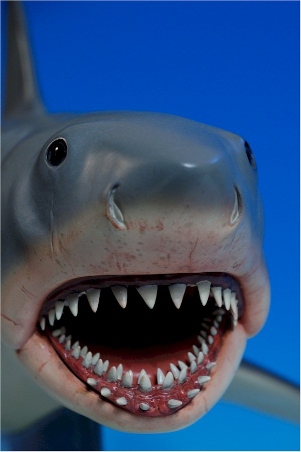 Jaws The Shark Toys 55